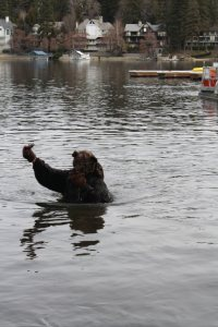 "Dressed in a bear costume Nancy Anderson from the ""Bears are Us"" program at Wildhaven Ranch came up with a ""fish"" after taking a dip in Lake Arrowhead."