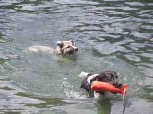 Havin' a great time swimming in Green Valley Lake. Don't interrupt me! Even the dogs had fun on Labor Day!